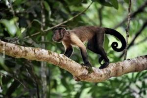 Amazonia_birding_nov2017_58