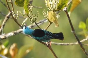Amazonia_birding_nov2017_61