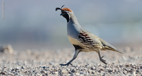 Las Vegas: poker e birdwatching, nov/2014