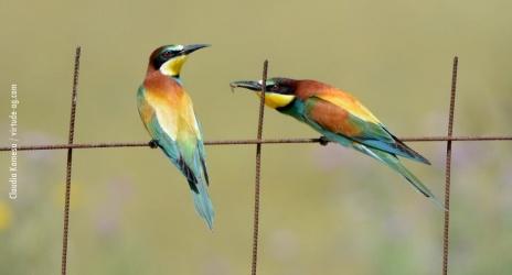 Espanha: Parque Nacional de Doñana, abr/17