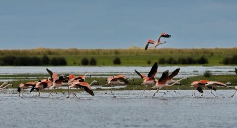 Birdwatching na Lagoa do Peixe – Tavares – RS, abr/2016
