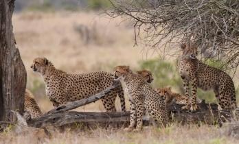 Kruger – África do Sul, out/17