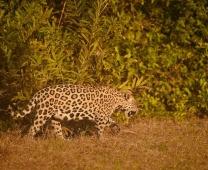 Pantanal ago/17, Claudia Komesu