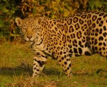 Pantanal ago/17, por Cristian Andrei