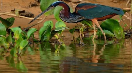 Amazônia – Água