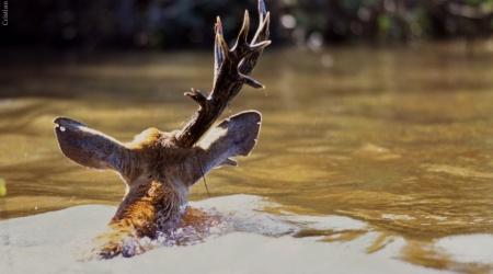 Pantanal – Água