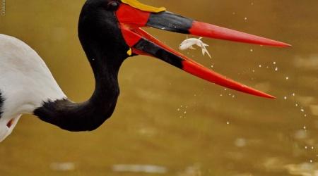 África do Sul – Aves grandes