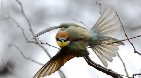 África do Sul – Aves pequenas
