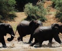 Viagens Favoritas: África do Sul