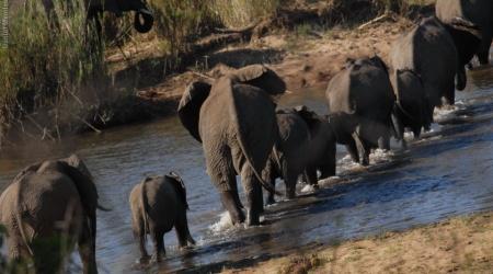 África do Sul – Elefantes