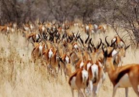 Álbuns de fotos: África do Sul