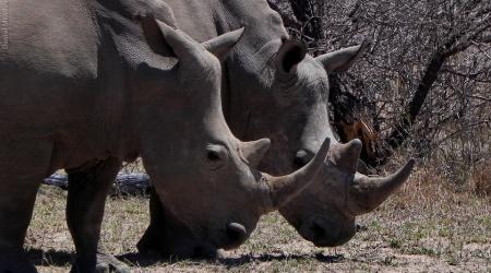 África do Sul – Bichos 1