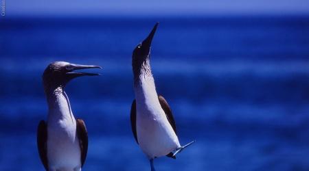 Galápagos – Cidadãos
