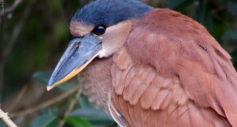 Blog: câmeras para fotografia de fauna