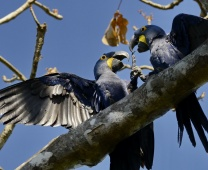 Viagem: Pantanal Norte – Transpantaneira, um dos melhores lugares para fotografar fauna no Brasil, jul/13