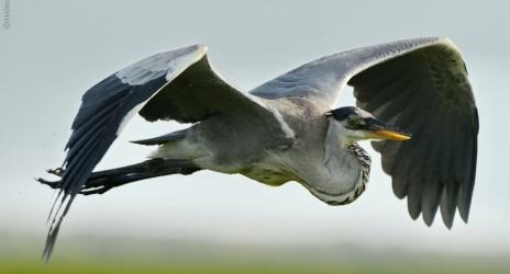 Blog: Notas pessoais sobre uma fotografia artística de aves. P1 regulagens