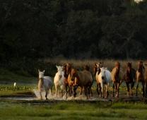 Viagem: Pantanal Sul – Nhecolândia (Corumbá – MS), jun/08