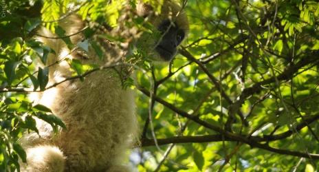 Passeio: fim de semana na Bacury, reserva de Mata Atlântica que ainda abriga o mono-carvoeiro. Perto de Piracicaba – SP, abr/09