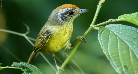 Passeio: Ubatuba – SP. Aves na Angelin, jul/10.