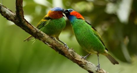 Passeio: Ubatuba – SP, out/10 – aves da varanda