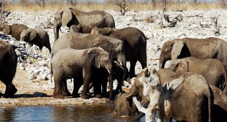 Viagem: nossa primeira vez na África do Sul e Namíbia, out/2006