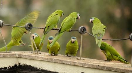 Aves da minha janela – Vila Madalena – SP