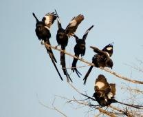 Viagem: África do Sul, só uma semana no Kruger, out/08