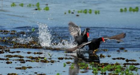 Passeio: Limeira e arredores, muita diversão com as aves comuns, ago/11