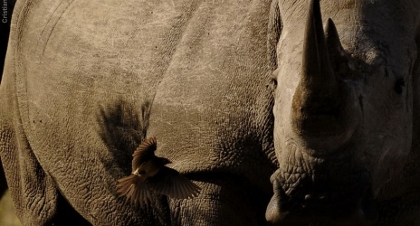 Viagem: África 2011, parte 1: rhino trip, com Daniel e vovôs