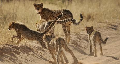 Viagem: África do Sul 2011, parte 2, o Kgalagadi – fotos do Cristian