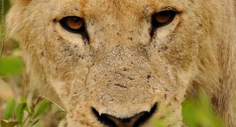 Viagem: África do Sul 2013, parte 1 – a festa do leopardo