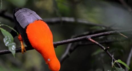Viagem: Peru a 4 mil metros e na floresta amazônica, out/13. Por Claudia Komesu
