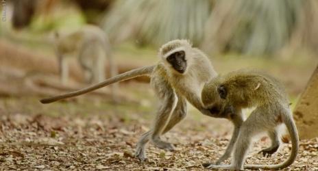 Viagem: África do Sul 2013 – parte 2, uma semana passarinheira