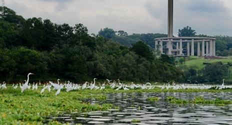 Passeio: mais Guarapiranga de caiaque, desta vez em meio a centenas de aves, mar/2014